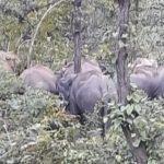 रजरप्पा मंदिर के पहुंच पथ पर अहले सुबह दर्जन भर हाथियों का झुंड देखा गया,श्रद्धालुओ मे भय का माहौल !